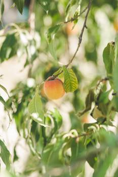 Grove Fruit Tree Free Photo