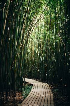 Bamboo Tree Forest #426058