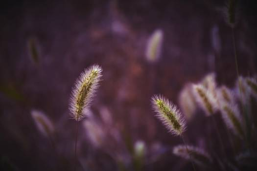 Herb Carnivorous plant Plant #426068