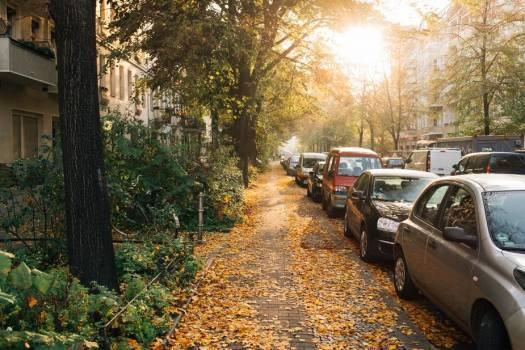Quiet Fall Morning On Urban Street Free Photo