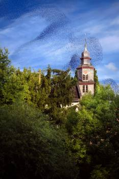 Bird Swarm Above Old Building In The Forest Free Photo