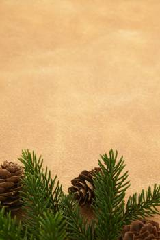 Fir Evergreen Tree Free Photo