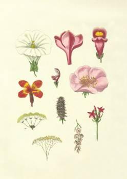 Floral Flower Pink #426169