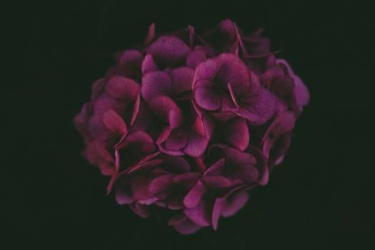 Pink Petal Flower #426170