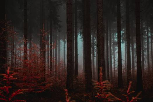 Forest Tree Landscape #426205