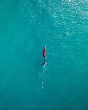 Sea Ocean Water #426216