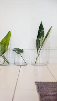 Plants Vase Free Photo #426255