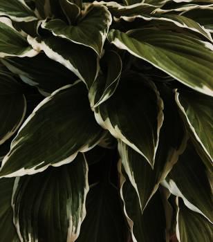 Agave Desert plant Vascular plant #426335