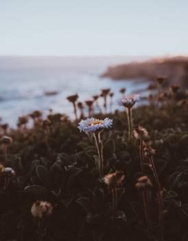 Plant Field Landscape #426461