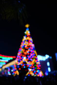 Decoration Holiday Tree Free Photo