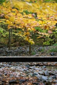 Tree Autumn Fall #426559