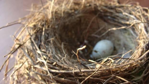 White Egg on Nest #42764