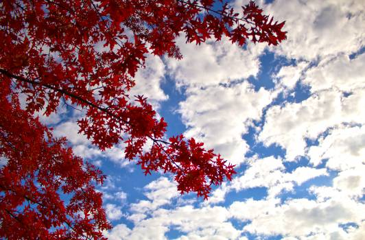 Low Angle Photography of Red Leaf Tree Under Cloudy Blue Sky during Daytime #42799
