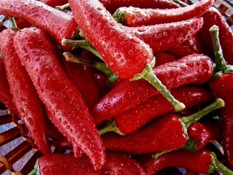 Red Chili Free Photo