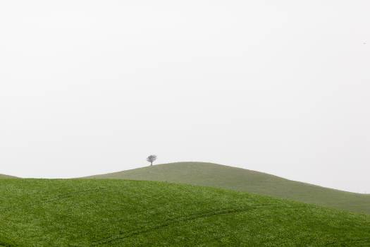 Landscape nature meadow tree Free Photo