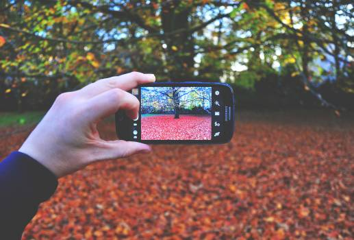 Person Holding Black Android Smartphone Taking Picture on Tree during Day Time #43191