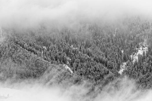 Gray Scale Trees Photography Free Photo