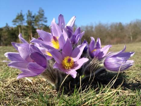 Purple Multi Petal Flower on Grass Free Photo