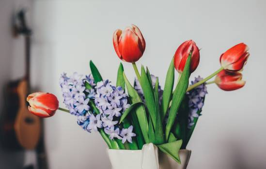 Red and White Tulips and Lavender Flowers #43579