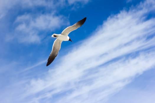 Animal flying bird clouds Free Photo