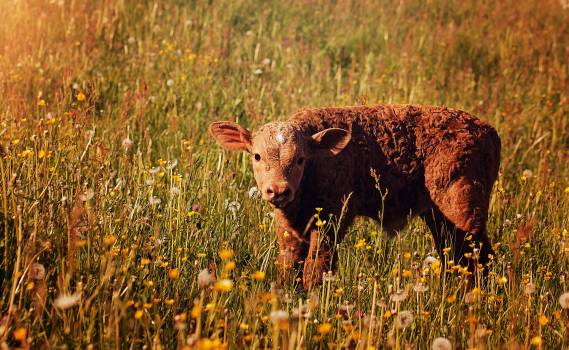 Nature animal cute grass #43600