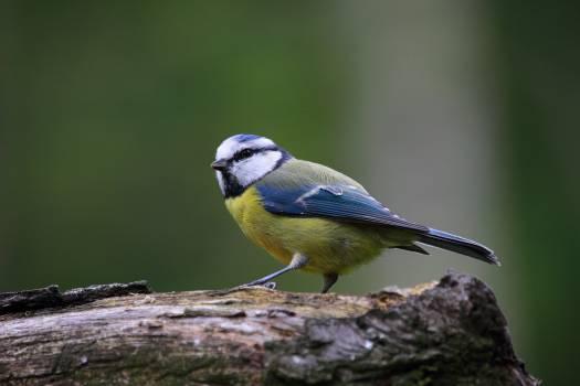 Nature bird cute wildlife #43625