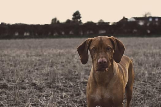 Brown Dog during Daytime #43635
