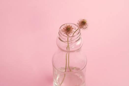 Flowers plants dandelions bottle Free Photo