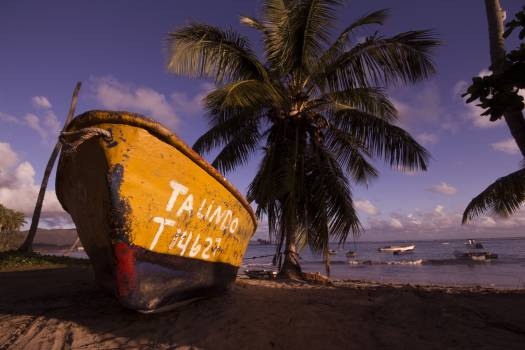 Brown and Black Boat on Shore Near Coconut Trees Under Blue Sky and Clouds Free Photo