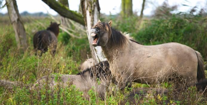 Nature animal horses icelandic horses #43943