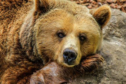 Nature animal zoo bear #44164