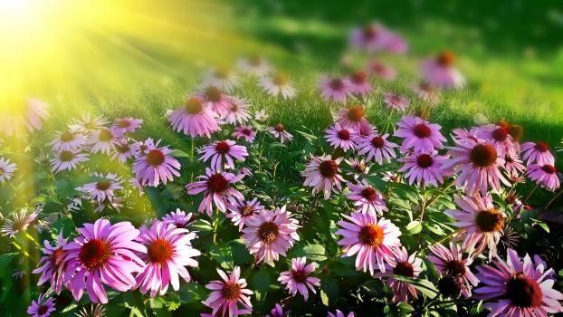 Purple Petal Flowers Free Photo