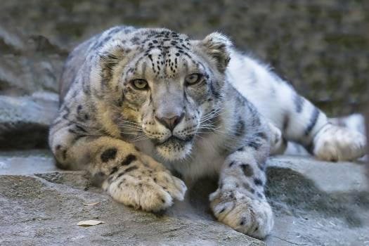 Animal big ground fur #44257