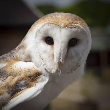 White and Brown Owl Animal Free Photo