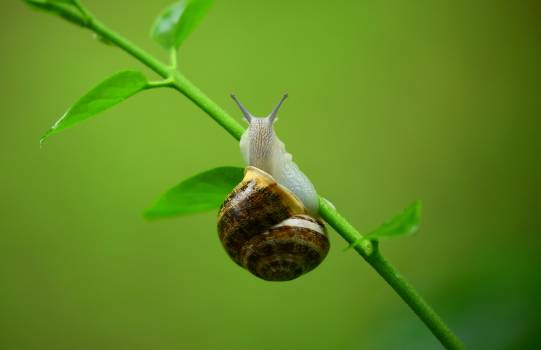 Brown and Gray Snail on Green Plant Branch #44275