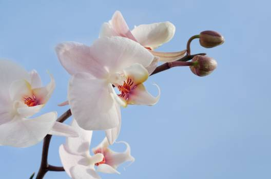 Pink and White Orchids\ #44295