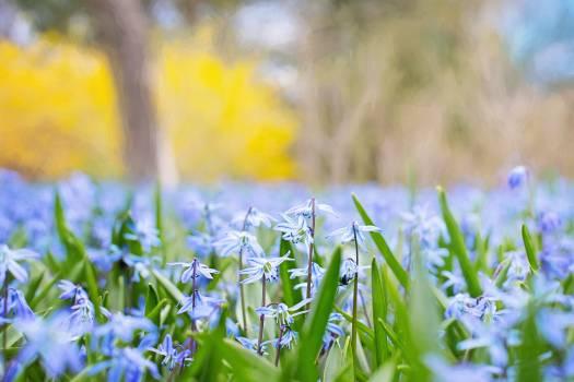 Selective Focus of Lavender Petal Flowers Free Photo