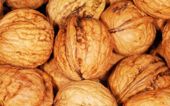 Food brown nuts snack #44371