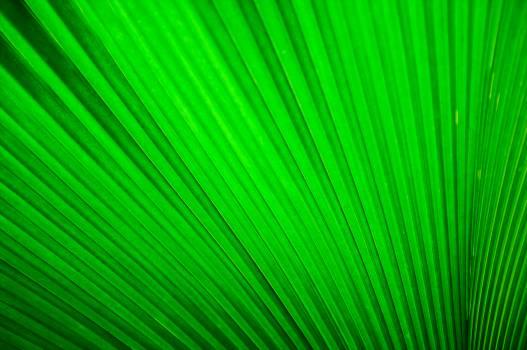 Green Leaf #44391