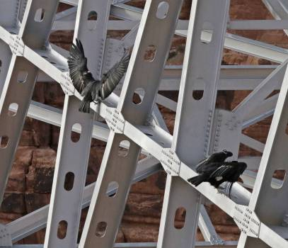 Black Birds on Scaffolding #44436