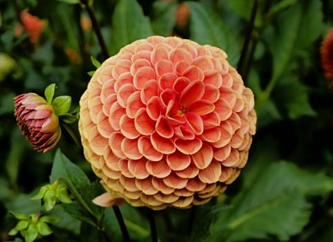 Flower closeup plant #44442