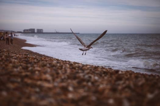Black and White Bird Flying Near Wide Ocean during Daytime #44465