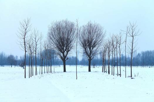 Gray Leafless Tree during Winter Free Photo