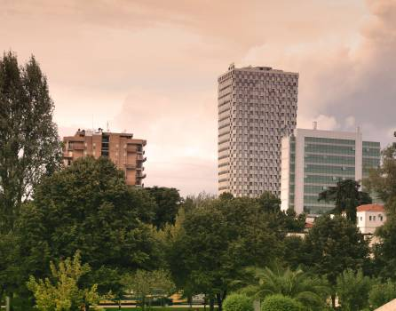 High Rise Buildings Near Green Leaf Trees Under White Sky during Daytime #44745