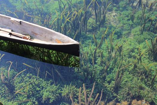 Water clear water canoe algae #44831