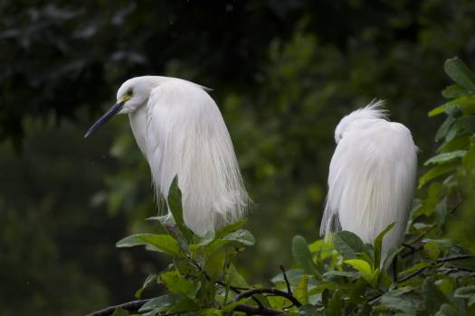 White Feathered Birds Perching on a Tree Free Photo