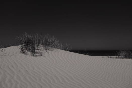 Green Grass on White Sand during Evening Free Photo