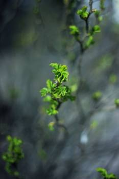Plant nature green leaves Free Photo