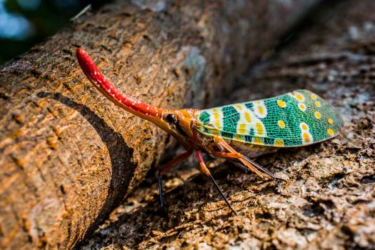 Red long colorful insect #45196