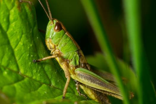 Grasshopper Green and Yellow #45239